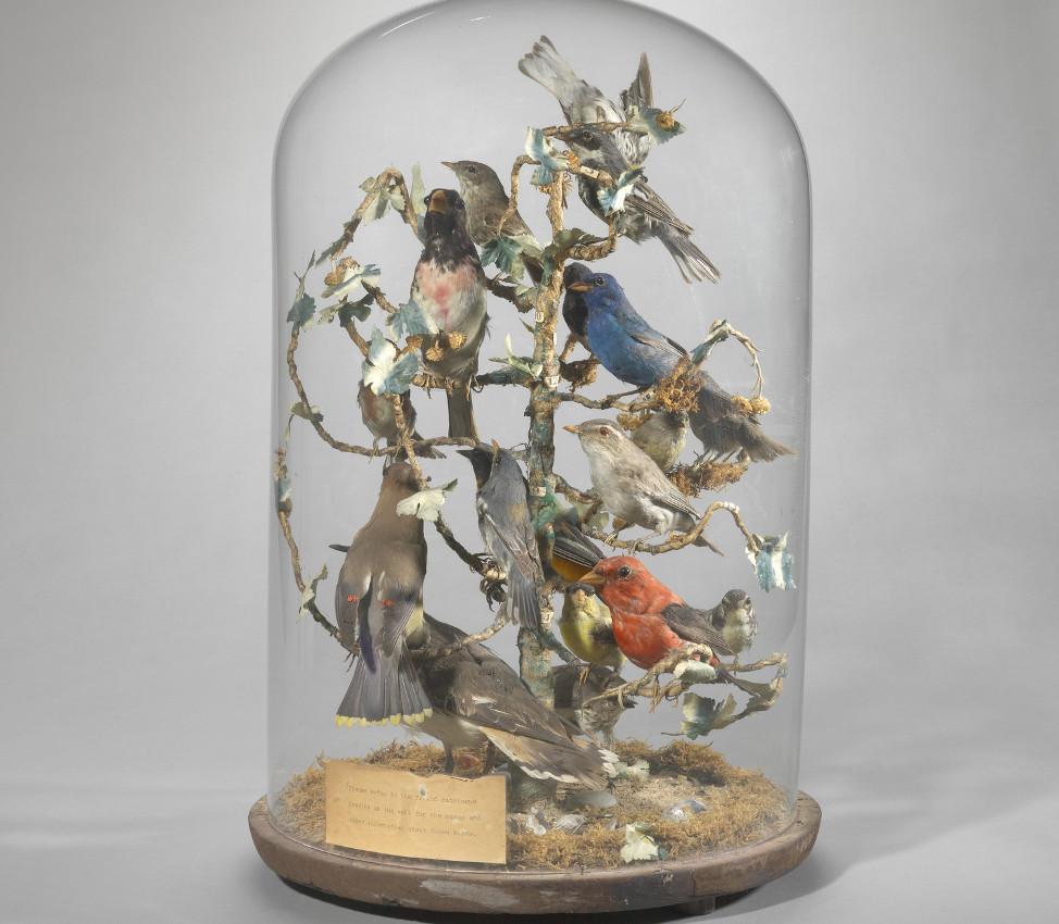 Unknown (American), Birds of Mary Lyon's Time parlor dome, 1845