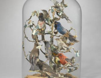 American, Birds of Mary Lyon's Time parlor dome