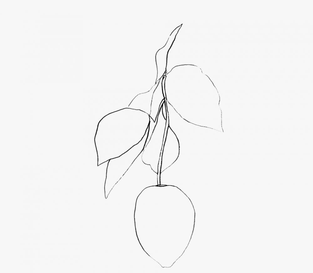 Ellsworth Kelly (American, b. 1923), Citron (Lemon) (detail), 1965-66