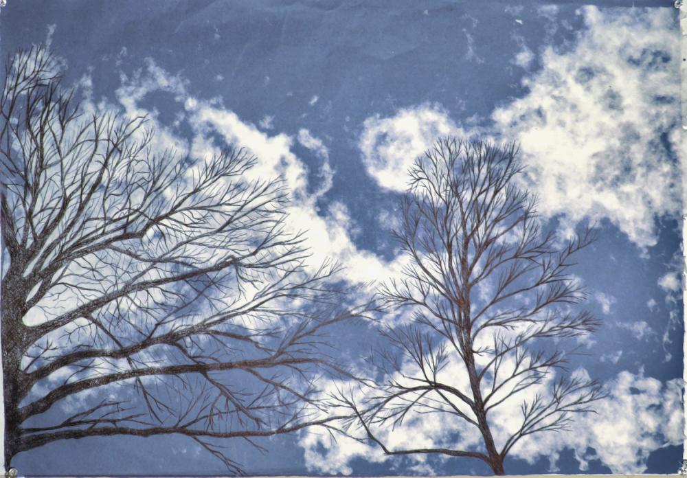 Two black trees rise from the bottom of a denim sheet of paper with white cotton clouds. The pen marks are visible hatches with tiny amounts of background showing.