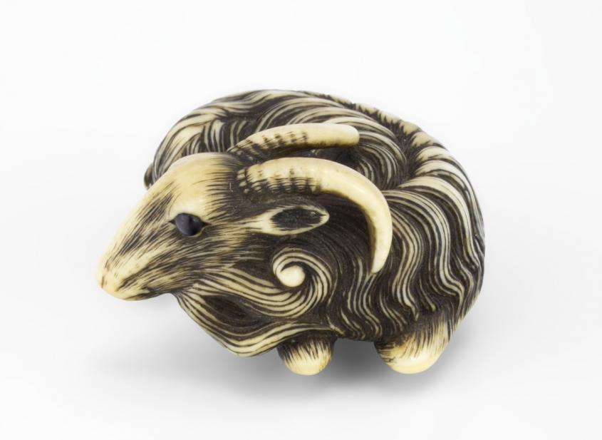 Japanese, Goat