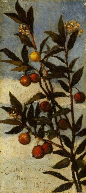Boott, Elizabeth, Flowering Arbutus Tree (Castel Fusano)
